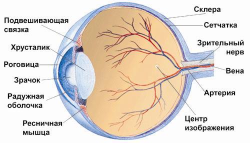 Как можно улучшить или восстановить зрение
