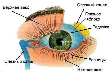 Картинки по запросу болезни глаз