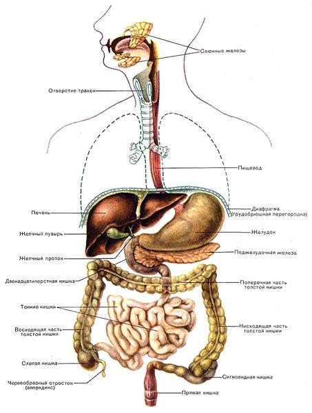 Видеофильм заболевания органов пищнварения