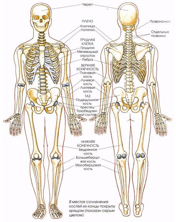 Заболевания костей суставов крем от суставов лошадиная сила
